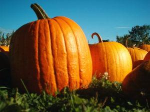 Pumpkins in New Hampshire
