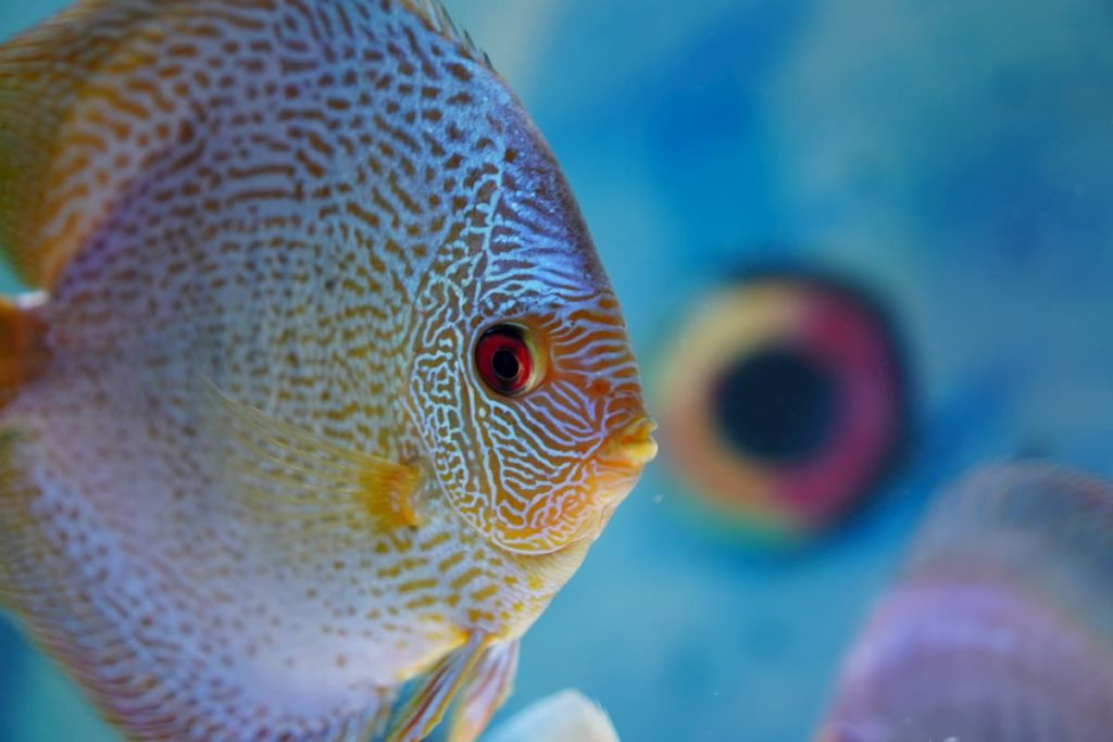 Close up of a fish face