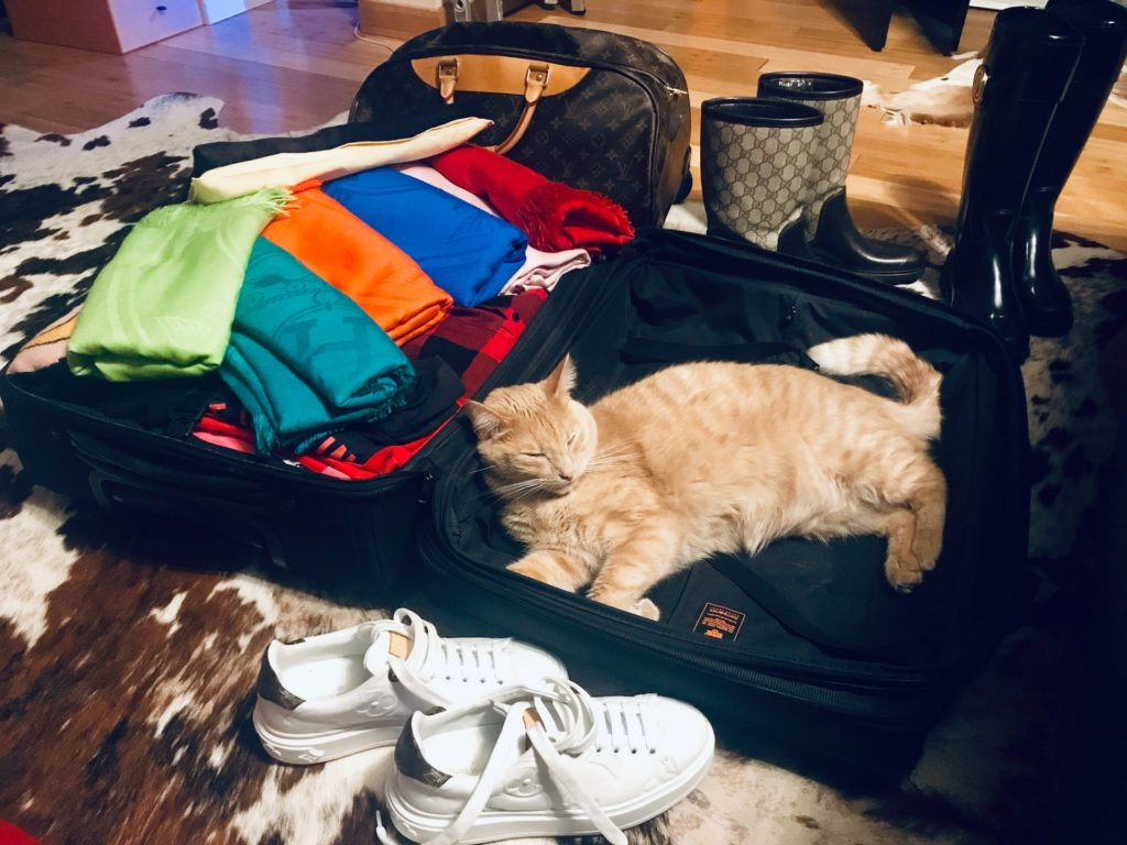 Cat lying in a suitcase